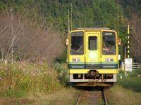 Isumi_mooming20091012_201_3