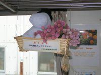 Isumi_mooming20091012_203_3