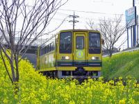 Isumi_mooming20100314_2