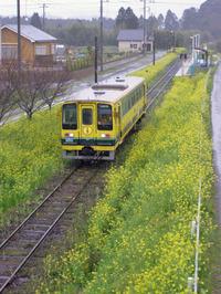 Isumi_siromigaoka20100325_1