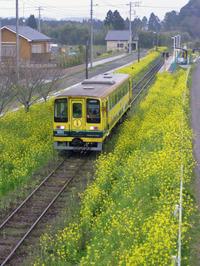 Isumi_siromigaoka20100329_1