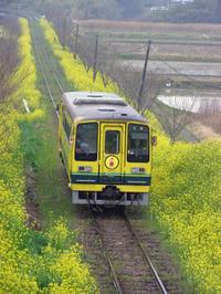 Isumi_siromigaoka20100329_2