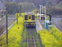 Isumi_siromigaoka20100329_3