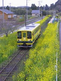 Isumi_siromigaoka20100402_1