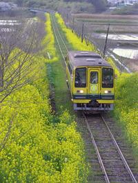 Isumi_siromigaoka20100402_2