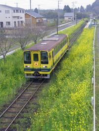 Isumi_siromigaoka20100406_1