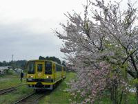 Isumi_mooming20100411_1