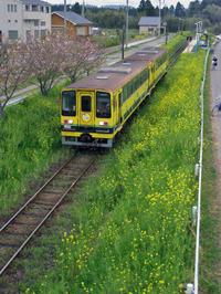 Isumi_siromigaoka20100412_1