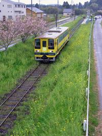 Isumi_siromigaoka20100415_1