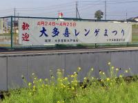 Isumi_siromigaoka20100418_4