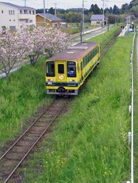 Isumi_siromigaoka20100420_1
