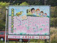 Isumi_siromigaoka20100424_4