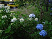 Hotaru20100615_1