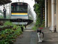 Turumi20101010_08