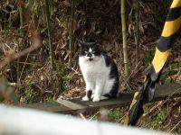 Isumi_rail_cat20110227_01