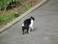 Isumi_rail_cat20110227_02