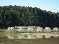 Isumi_moomin20110413_01