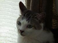 Michan20110604_01