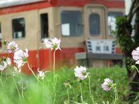 Isumi_kiha52_20110903_08