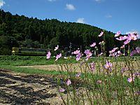 Isumi_moomin20110918_06