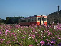 Isumi_kiha52_20111104_16