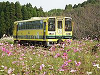 Isumi_moomin20111105_08