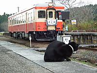 Isumi_kiha52_20111113_07