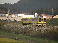 Isumi_moomin20111113_08