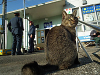 Isumi_kuniyosi20111229_04_2