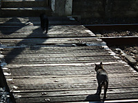 Isumi_kuniyosi20120204_03