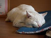 Isumi_kuniyosi20120226_02