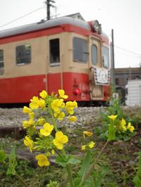 Isumi_kiha52_20120318_08
