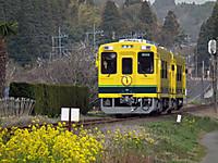 Isumi300_20120328_01