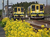 Isumi_moomin20120331_04_3