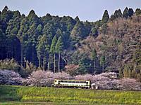 Isumi_moomin20120409_01