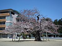 Tsuchiura20120408_16