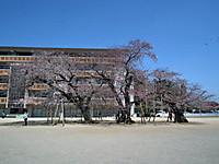 Tsuchiura20120408_18
