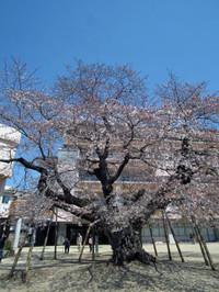 Tsuchiura20120408_19