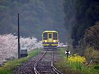 Isumi_moomin20120411_01