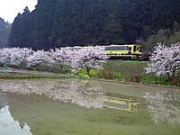 Isumi_moomin20120411_04