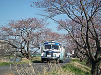 Tsuchiura20120408_32