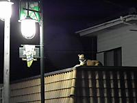 Isumi_kuniyosi20120505_02