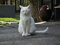 Nekoneko20120518_05