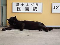 Isumi_kuniyosi20120520_01