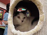 Nekobukuro20120610_03