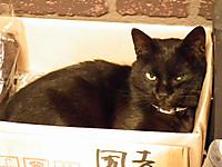 Isumi_hotaru20120615_13