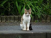 Isumi_azuma20120708_02