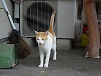 Yorokeikoku20120826_14