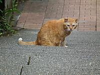 Ooyama20121003_36