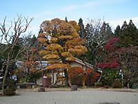 Kiso_ina20121124_20